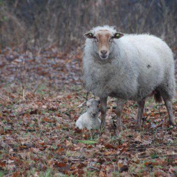 Eerste nieuwe leven op de Voskuilenheuvel in Venhorst