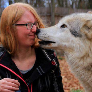 Michelle: wolven zijn slimmer dan honden
