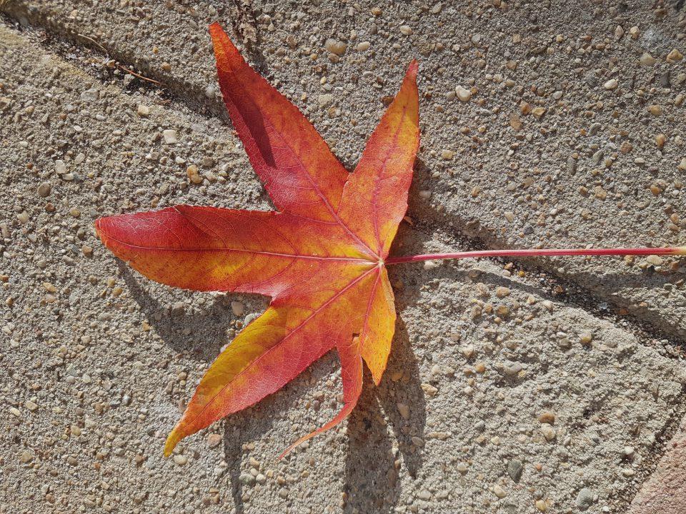 Herfststukjes maken met bladeren