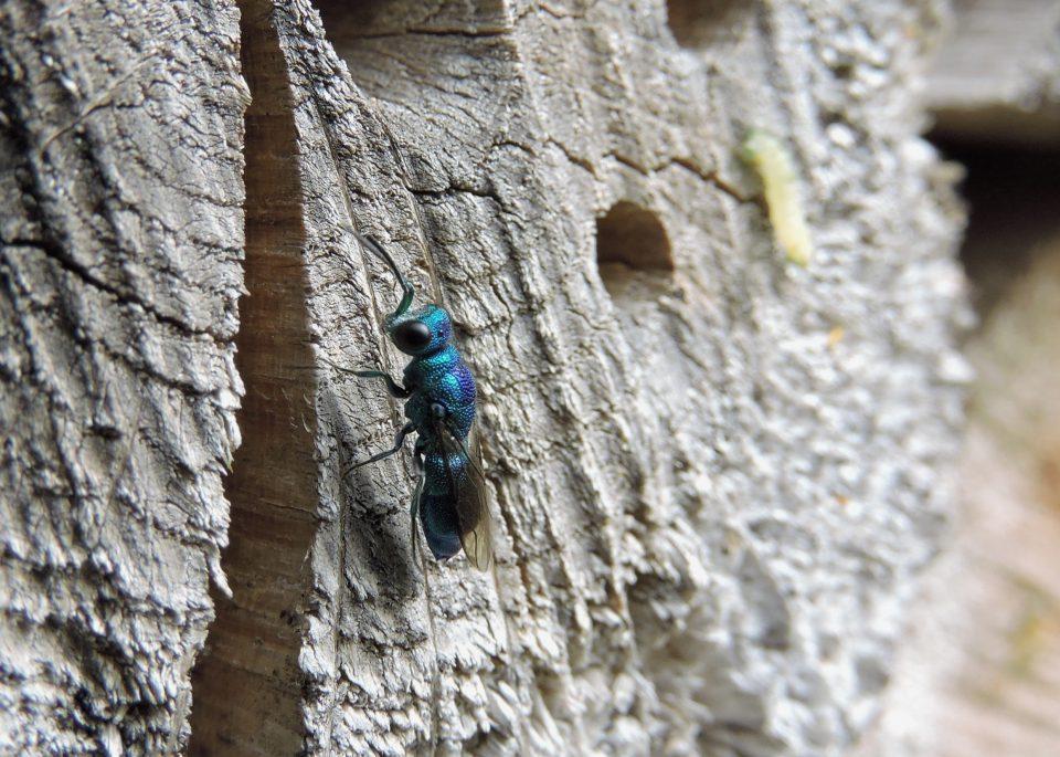 Onderkomen voor insecten JNW