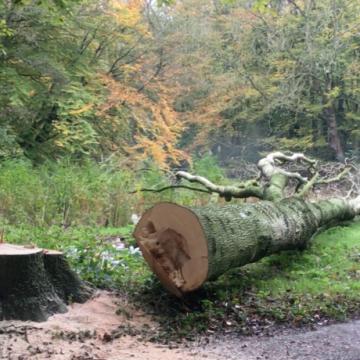 Bomenstichting niet blij met plannen Boekel