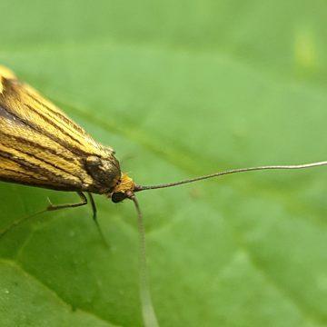 Insecten zoeken op de Perekker