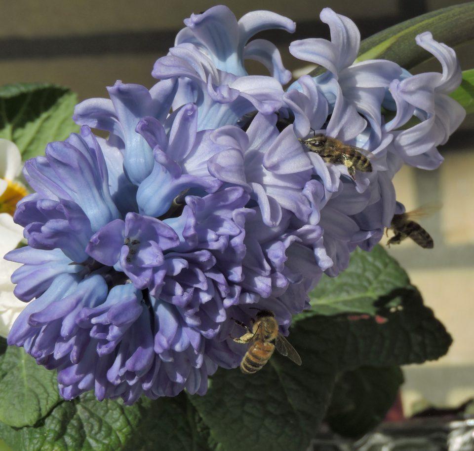 Jeugdnatuurwachten info middag over honingbijen