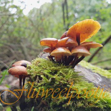 Op zoek naar paddenstoelen bij de Jeugdnatuurwacht